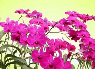 http://kabarunikzz.files.wordpress.com/2011/01/kimilsungia.jpg?w=300